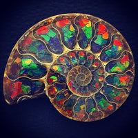 Ammonite Inlaid Rainbow Ammolite Rare Polished Fossil Stone Art Madagascar