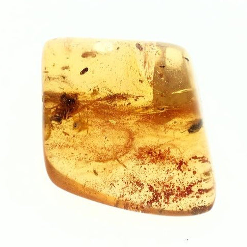 Colombian Amber with Insect Inclusions Natural Polished Fossil Mineral Specimen