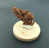 Native Copper Dendritic Cluster Mounted Miniature Mineral Specimen (Chino Mine, New Mexico, USA)