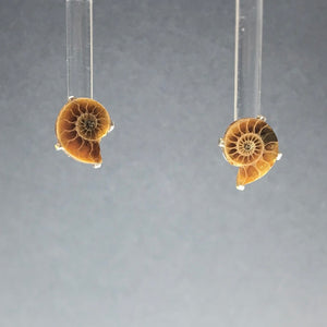 Ammonite Mini Natural Fossil Slice Sterling Silver Stud Earrings