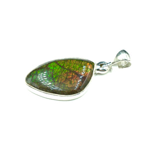 Ammolite Rainbow Fire Fossil Slice Sterling Silver Pendant