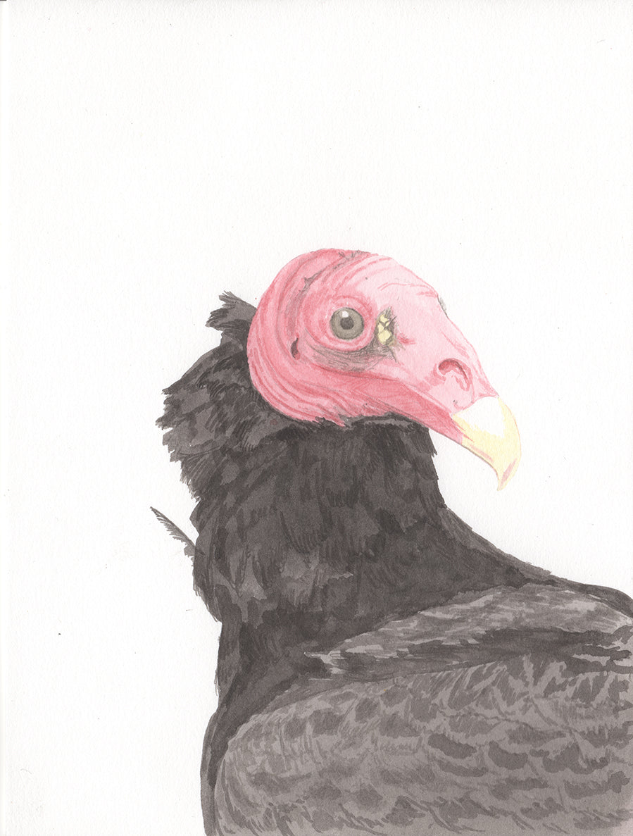 Painting of Turkey Vulture by Aimee Lusty