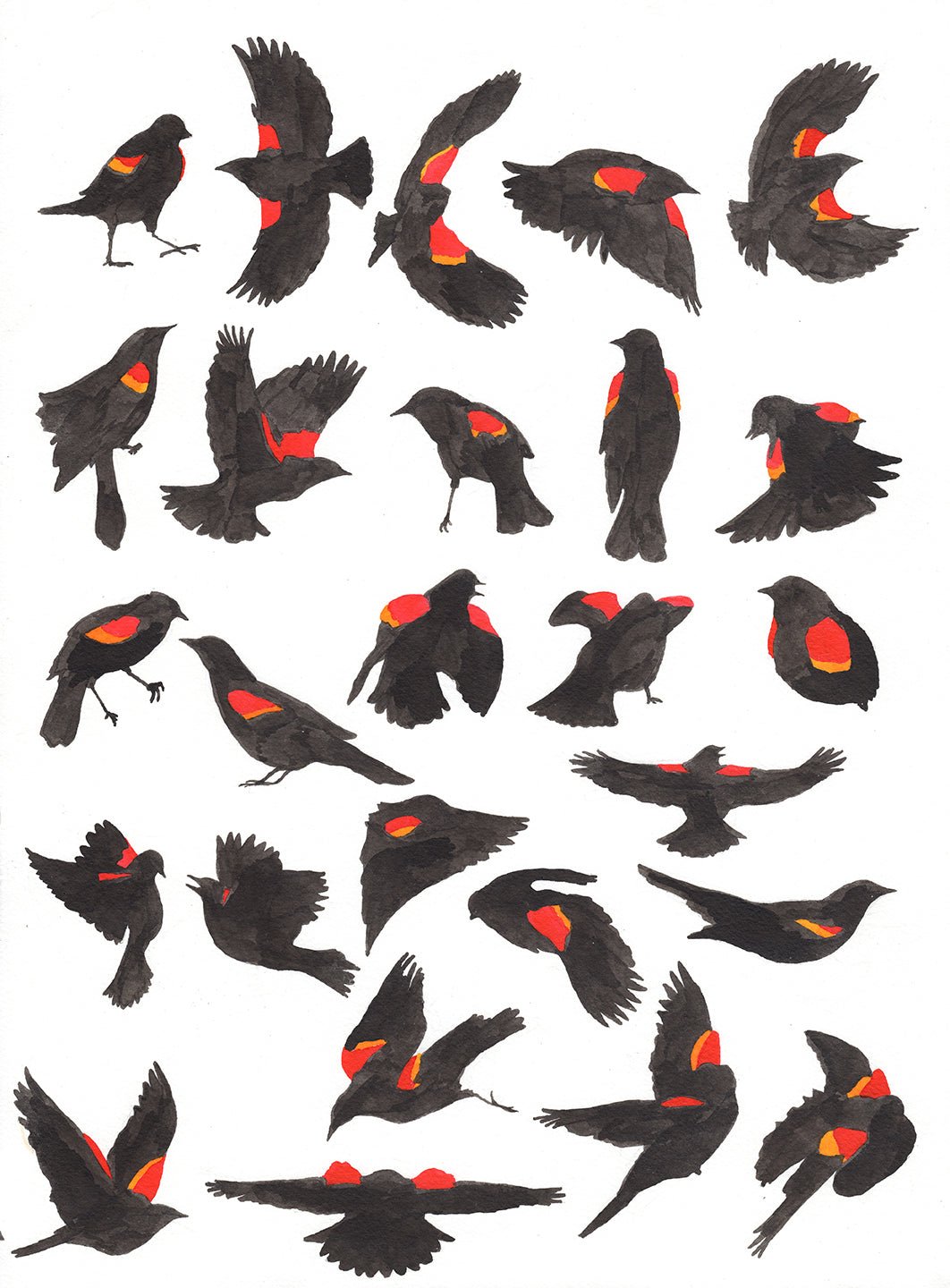 Painting of Red-Winged Blackbird Alphabet by Aimee Lusty