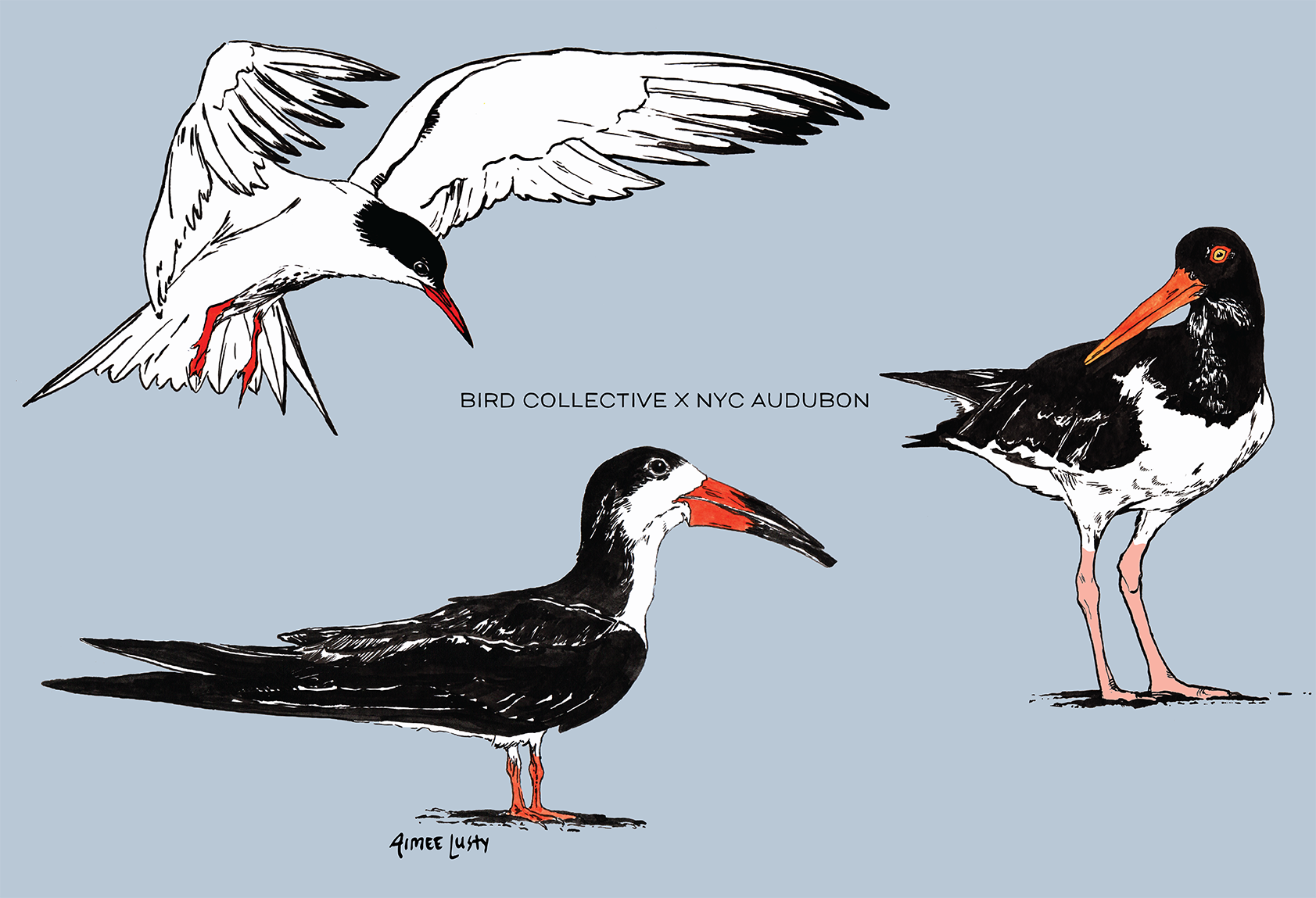 Common Tern, Black Skimmer and American Oystercatcher on Blue Background with text Bird Collective x NYC Audubon