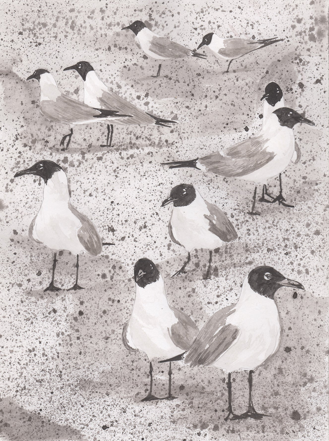 Laughing Gull Ink on paper by Aimee Lusty