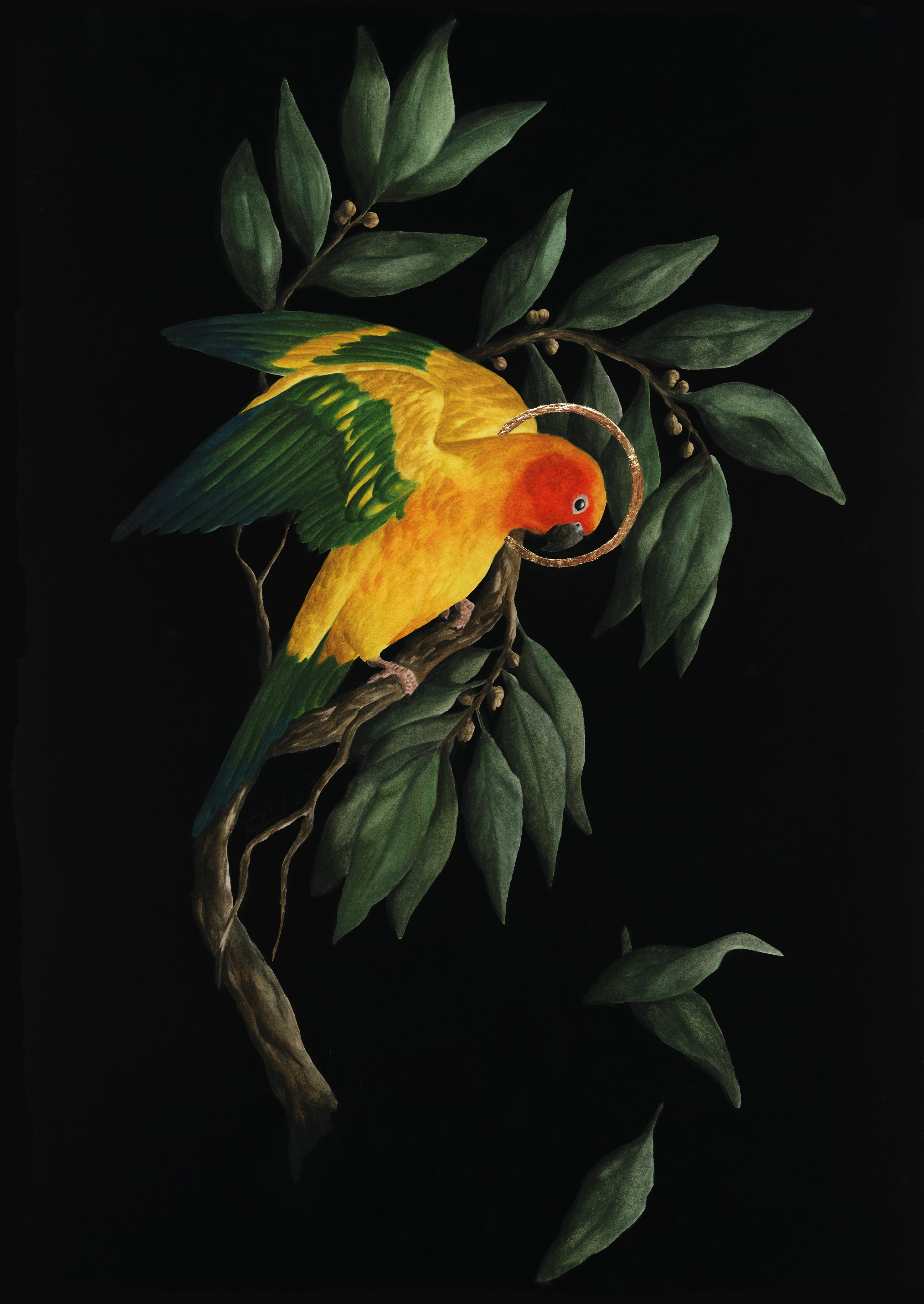 Painting of Parrot by Sophie McVicar