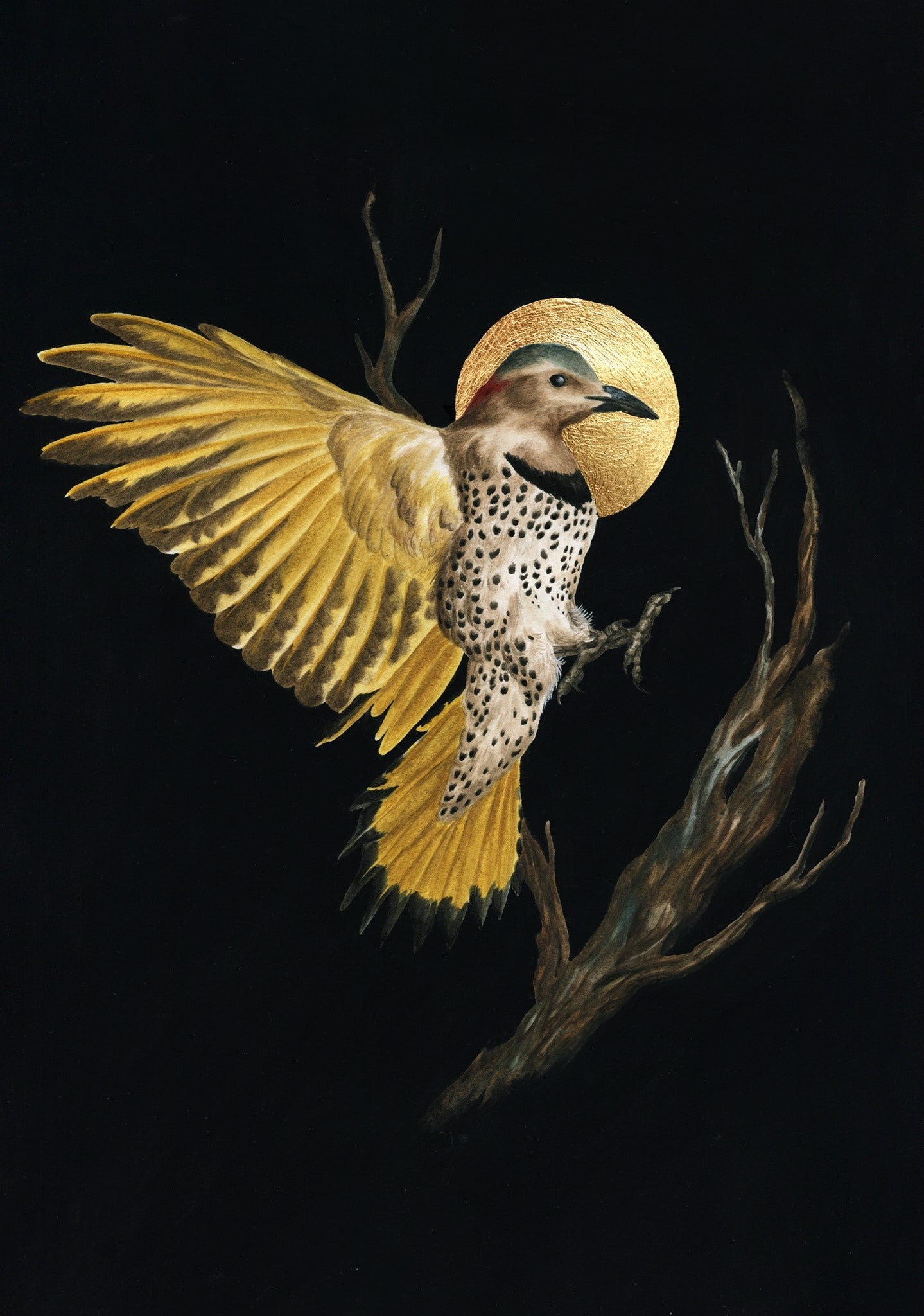 Painting of Northern Flicker by Sophie McVicar