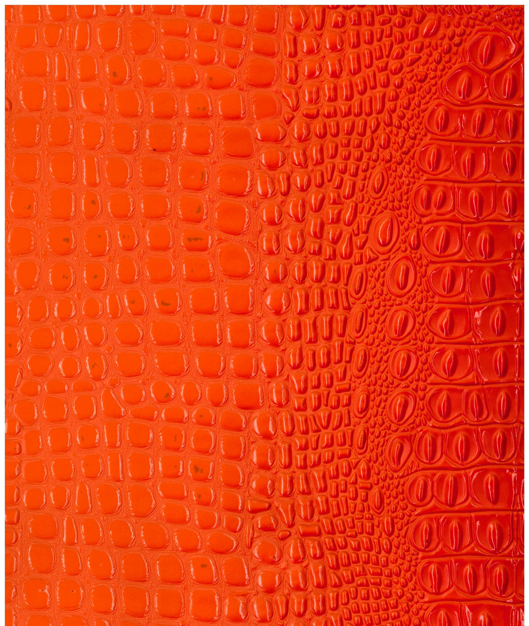 Crocodile Orange