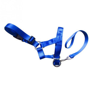 Pet Dog Head Collar Nylon Gentle Halter Leash Leader No Pull Straps for Training Dogs Pet Supplies
