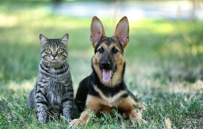 Healthy cat and dog sitting on grass together, happy because of self care tips