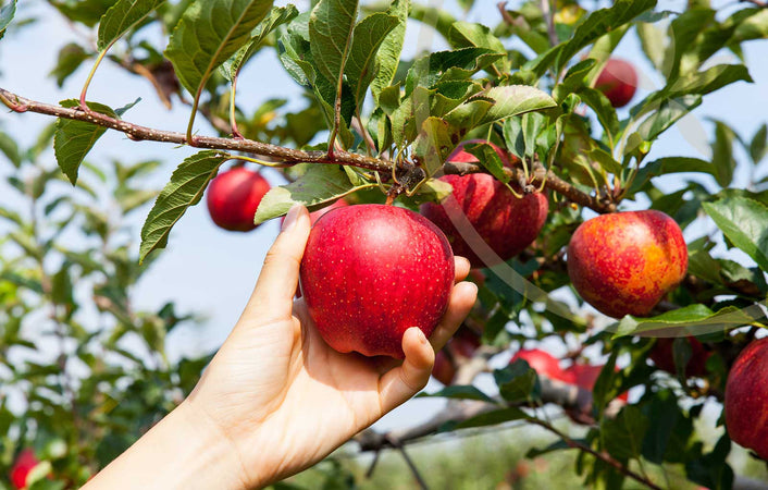 7 Good Reasons To Eat An Apple A Day