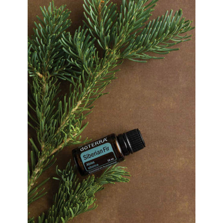 Siberian Fir Essential Oil | dōTERRA