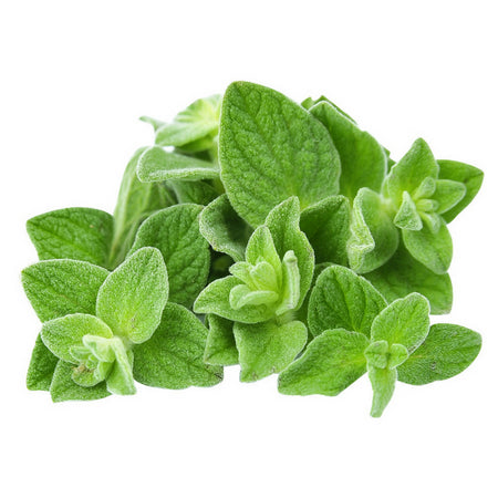 dōTERRA Oregano Essential Oil