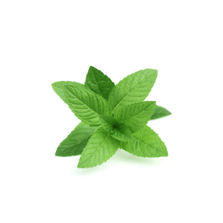 dōTERRA Peppermint Essential Oil