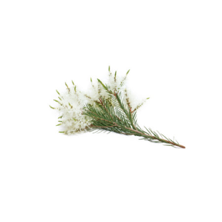 dōTERRA Tea Tree Essential Oil