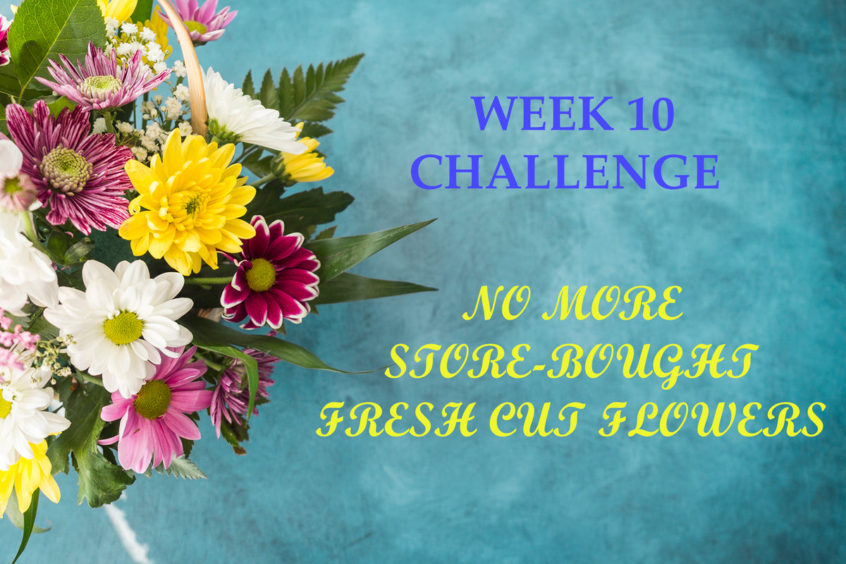 Week 10 Challenge - No more store-bought fresh cut flowers