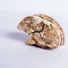 Load image into Gallery viewer, Agarikon (Laricifomes officinalis) Bioavailable Mushroom Powder