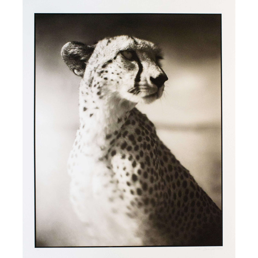 Nick Brandt, Portrait of Cheetah Against Dark Sky - Maasai Mara (from On This Earth Portfolio), 2004 | Lougher Contemporary