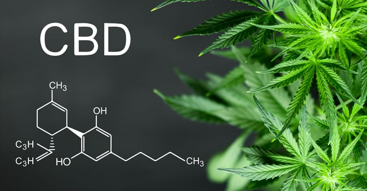 What is CBD? What you need to know.