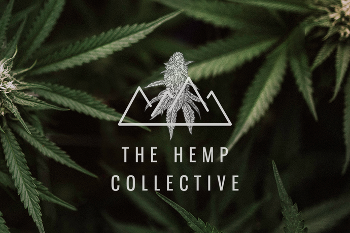 9 Critical Tips from Hemp Farms Who Succeeded in 2019
