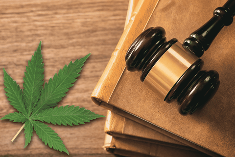 What is the future regarding lagalized cannabis?
