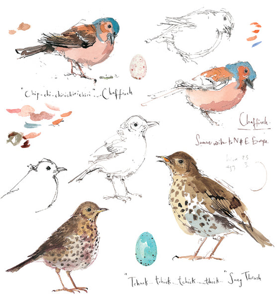Madeleine Floyd 'Chaffinch and Song Thrush' Mounted Limited Edition Print.