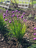Chive Flower Tablets & Tags