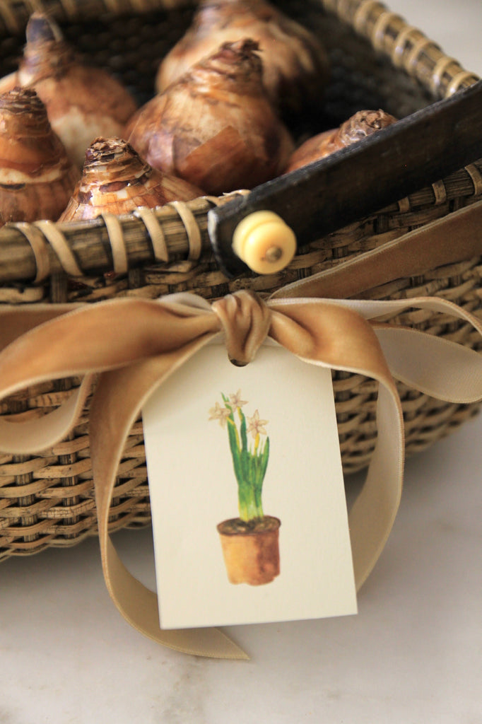 Paperwhites Tags - Set of 10