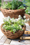 Willow Basket Planters | 3 Sizes