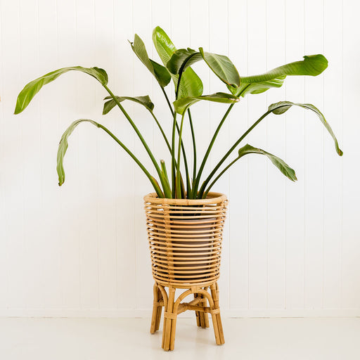 Retro Planter Natural