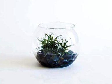 Desktop Tilly Terrarium