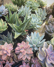 Load image into Gallery viewer, Add a succulent arrangement