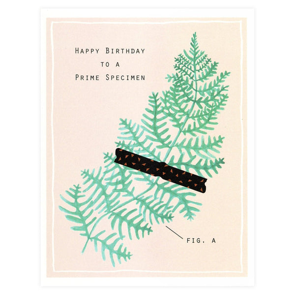 Alisa Bobzien Prime Specimen Birthday Card - GREER Chicago Online Stationery Shop