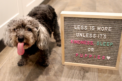Felt Letter Board by Jadelynn Brooke's Happy Hooligan Line - Haute Stuff Boutique