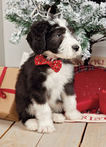 Dog Christmas Bow Tie