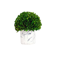 Boxwood Ball with Marble Pot