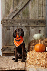 Halloween Dog Bandanas by Mud Pie - Choice of Style
