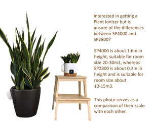 Potted Plant for Plant Ionizer SP4000