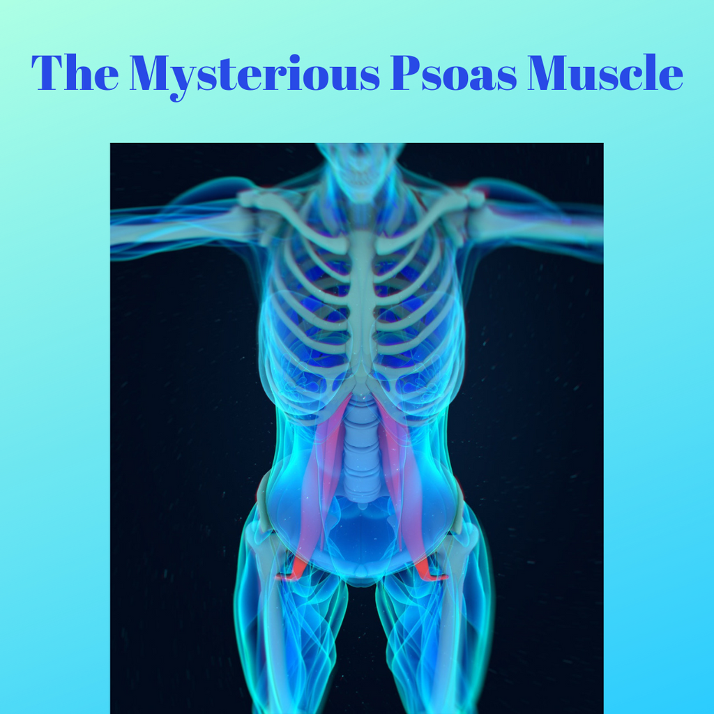 The Mysterious Psoas Muscle-Morgyn Danae Wellness