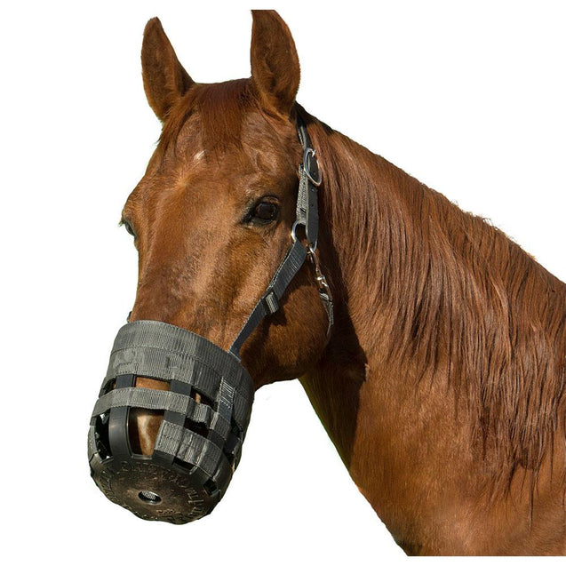 Best Friend Deluxe Grazing Muzzle With Padded Leather Crown