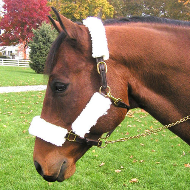Horse Halter Fleece Set