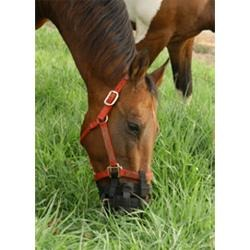 Best Friend® Grazing Muzzle - Large Horse to Mini Size - Best Friend Equine