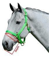 Best Friend Cribbing or Free-to-Eat Muzzle - Best Friend Equine how to fit