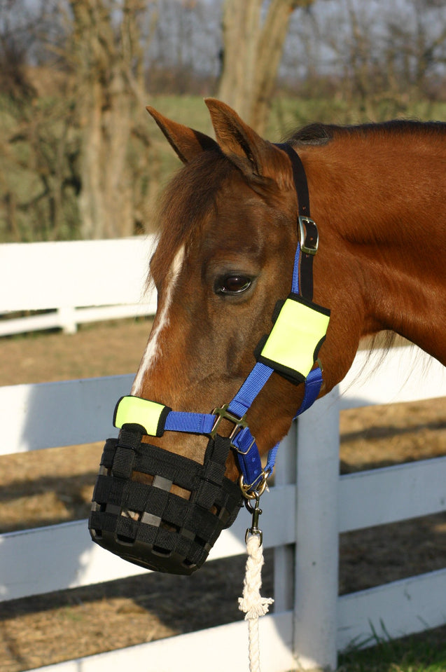 Best Friend Muzzle Mates - Best Friend Equine