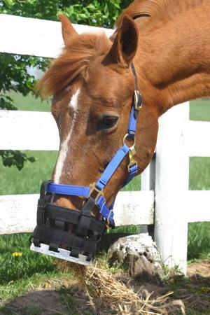 Best Friend Cribbing or Free-to-Eat Muzzle - Best Friend Equine