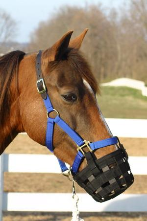 Best Friend Grazing Horse Muzzle