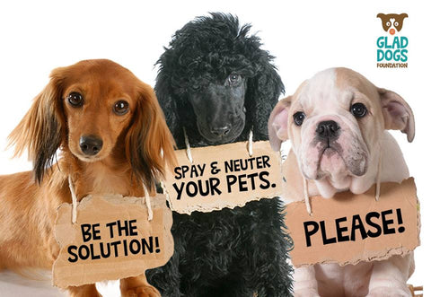 spaying and neutering how soon is