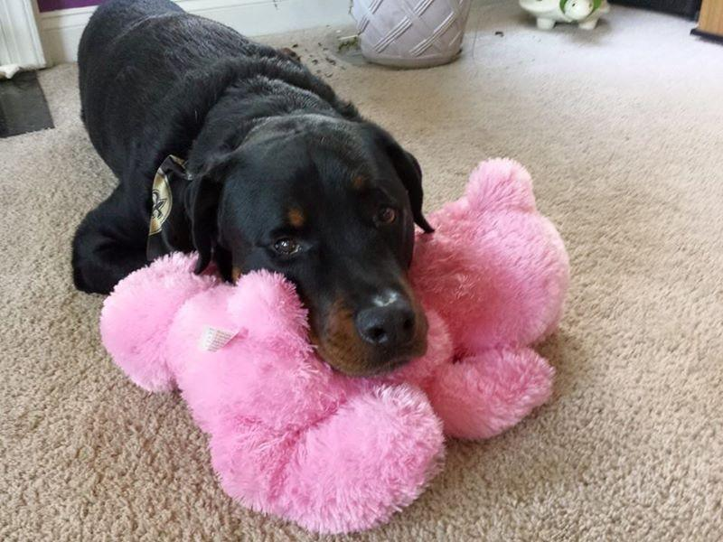 Wish List: Large Stuffed & SQUEAKY Dog Toy for Hardee Animal Rescue Team