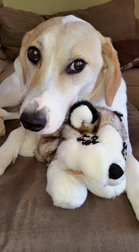 Wish List: Large Flat 'n Tuff Stuffing-Free Dog Toy for Fetch Foster & Rescue (WI)