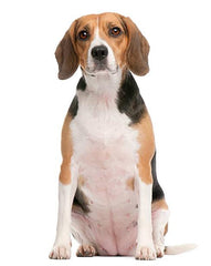 beagle breed dog toy mini me squeaky toy